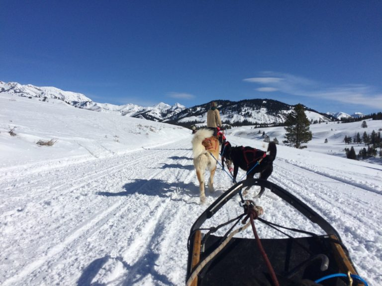 Dogsledding 2018