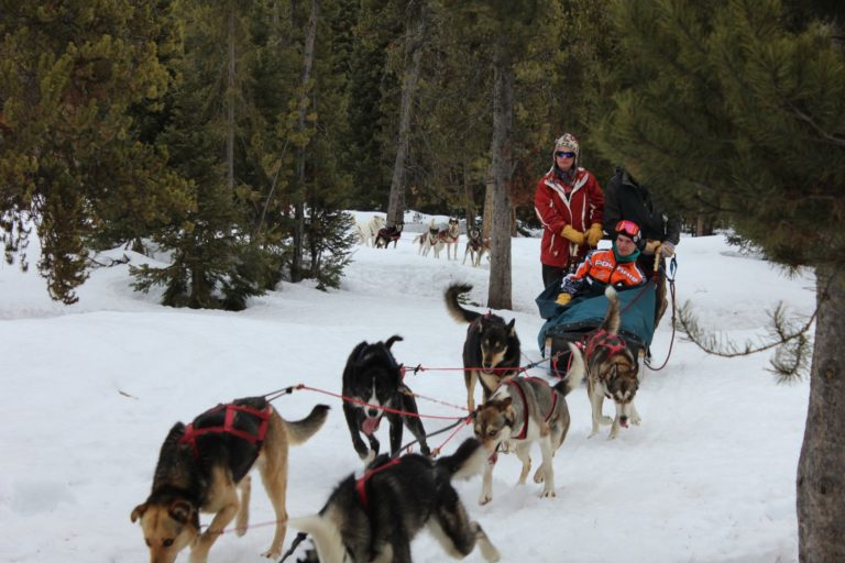 Clancy Dogsledding